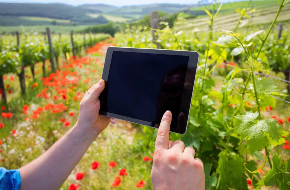 Five ways technology is changing the wine we drink