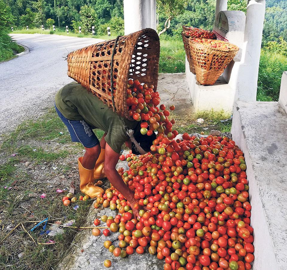 Farmers worried as India halts tomato exports via Kakarbhitta