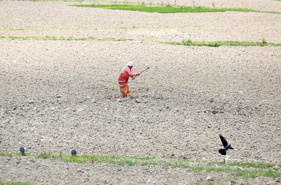Lack of irrigation infrastructure holding back export potential