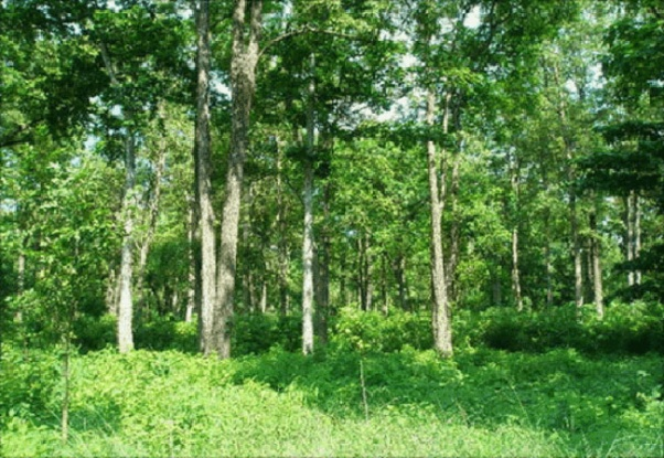 Forest in Kailali depleting alarmingly