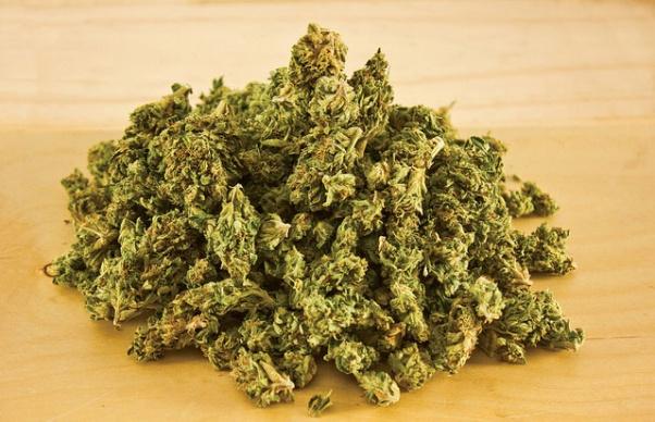 112 kg marijuana destroyed; absconding convict arrested