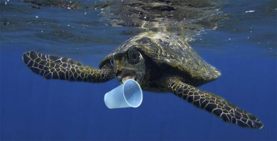 Marine plastic: Hundreds of fragments in dead seabirds