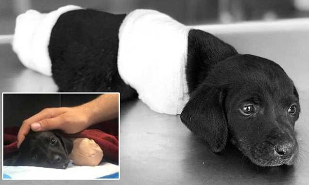 Turkish Prez vows to amend animal rights law after puppy's legs and tails are chopped off