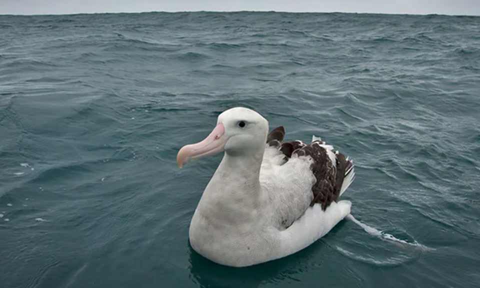 New Zealand the most perilous place for seabirds due to plastic pollution