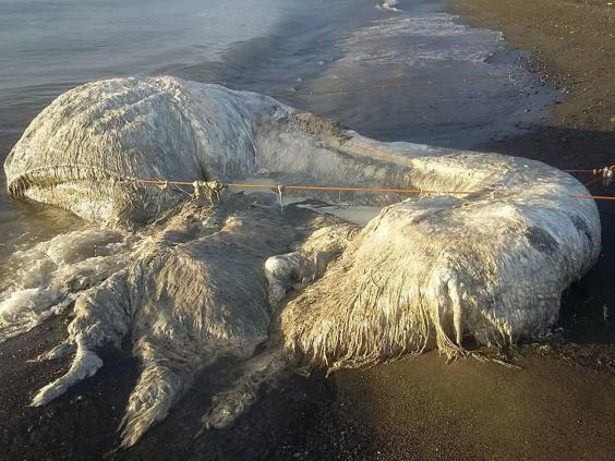 Mysterious hairy sea creature dubbed 'globster' washes up on Philippines beach