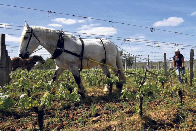 Green economy to boost jobs but farmers hard hit: UN