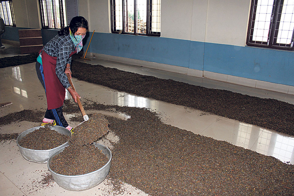 Indian customs officials obstruct Nepali tea exports: Industrialists
