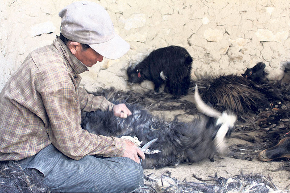 Construction of pashmina wool processing plant uncertain