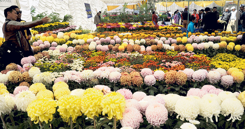 Nepal becoming self-reliant in flowers: Import of flowers on a slump this Tihar