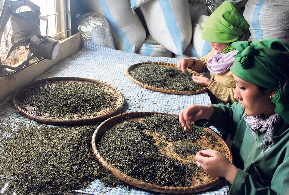 Foreign buyers looking for variety in Nepali tea