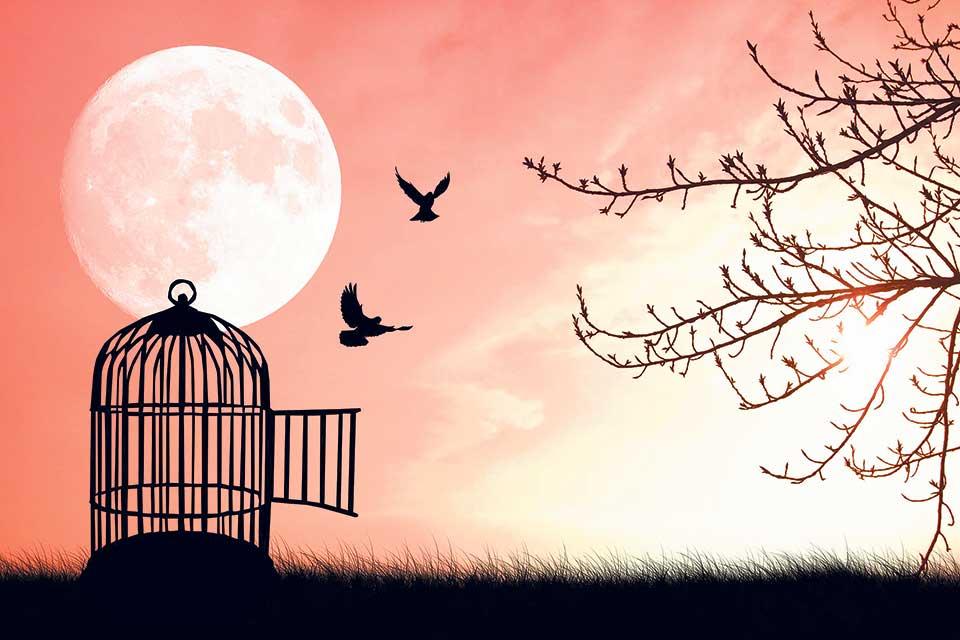 My City The Caged Free Bird