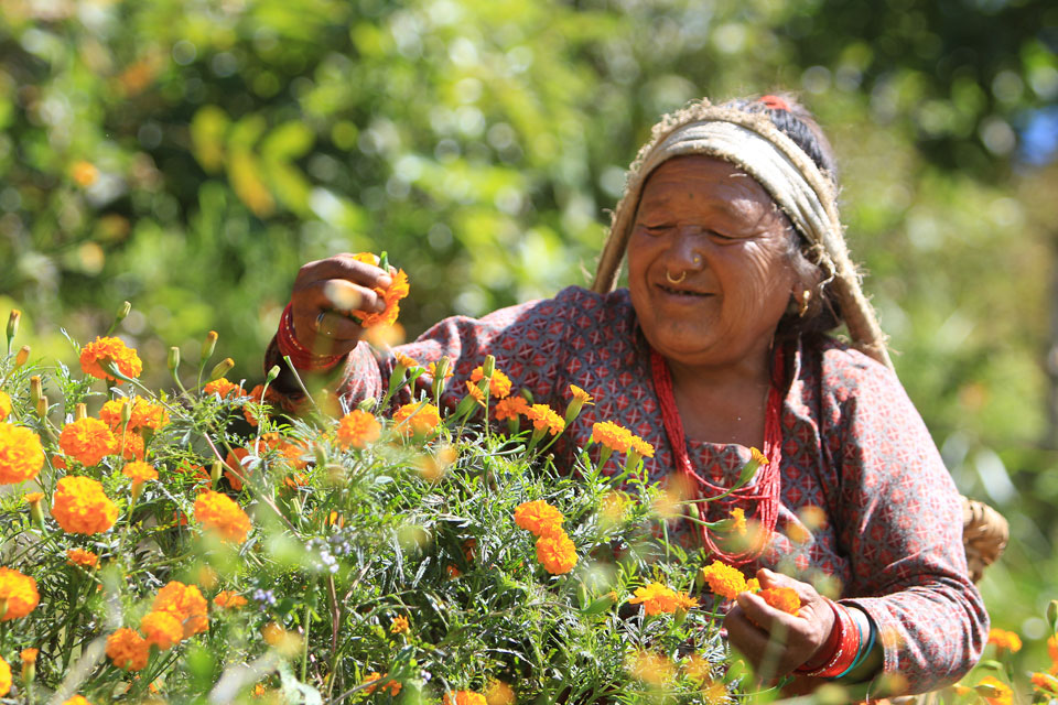 Nepal's dependency on flowers continues
