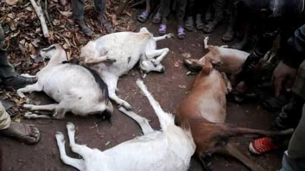 Lightning claims toddler, five goats in Achham