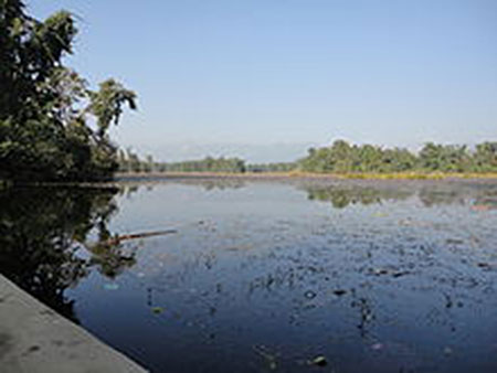 Some migratory birds making Ghodaghodi lake their 'permanent  home'