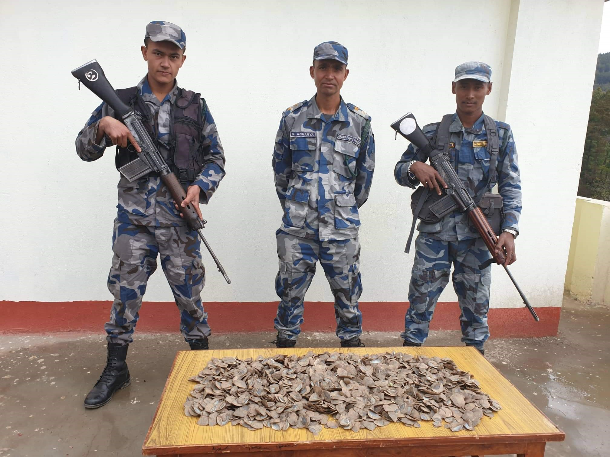 Pangolin scales widely traded illegally in Dolakha