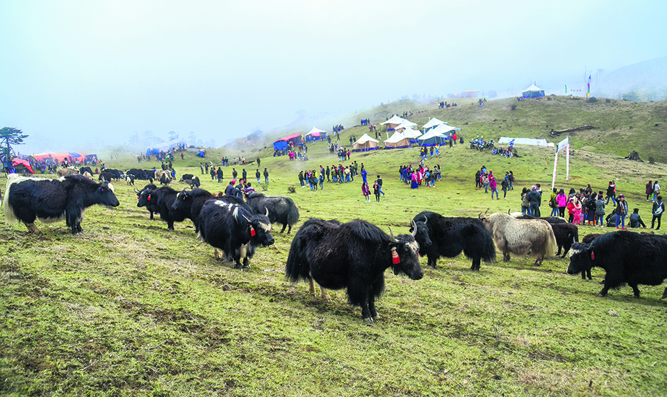 High-altitude yak festival draws tourists from India, China and Bhutan