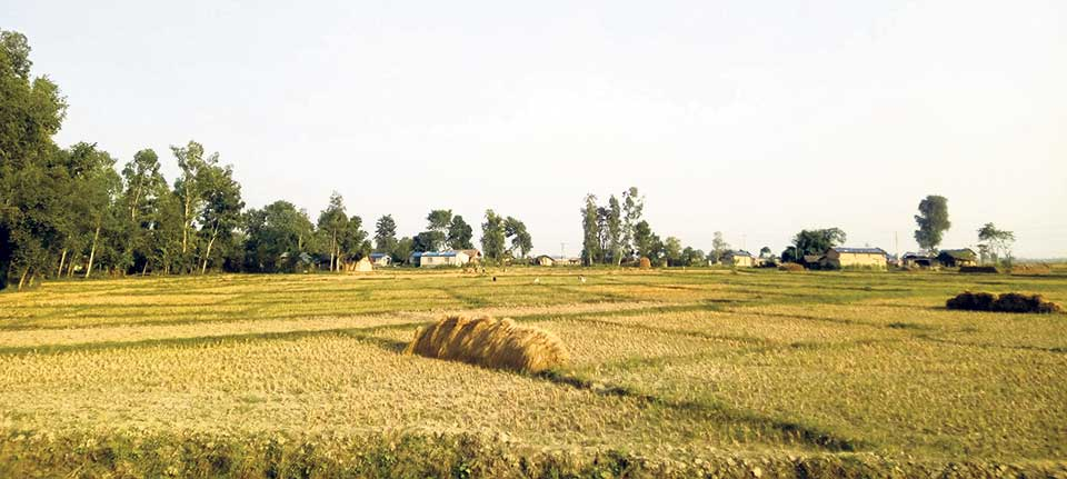 156 people get land certificate in Butwal