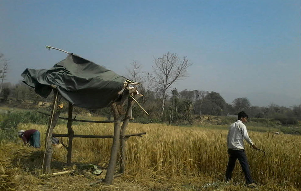 Wild animals damage crops leaving farmers upset