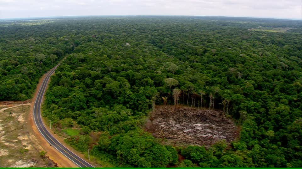 Sharp rise in Brazilian deforestation undeniable, says sacked research chief