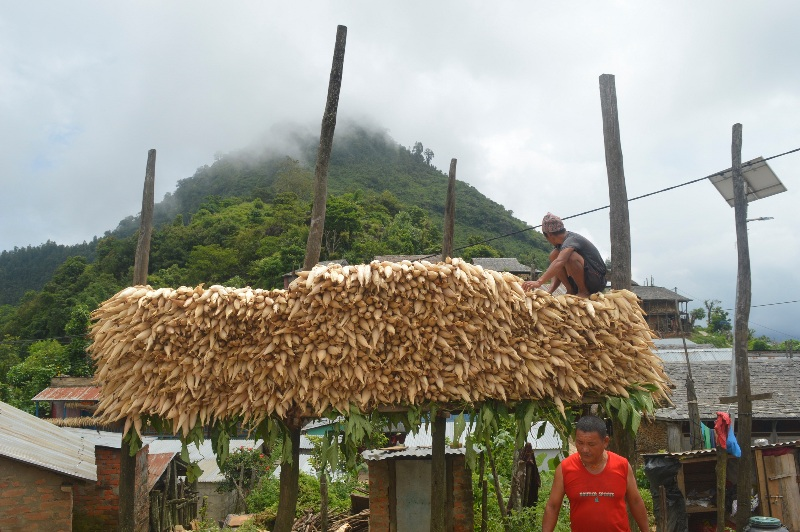 Corns: Free from rodents, attract tourists