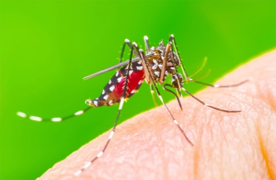 Diet drugs Make Mosquitoes Stop Biting, Study Finds