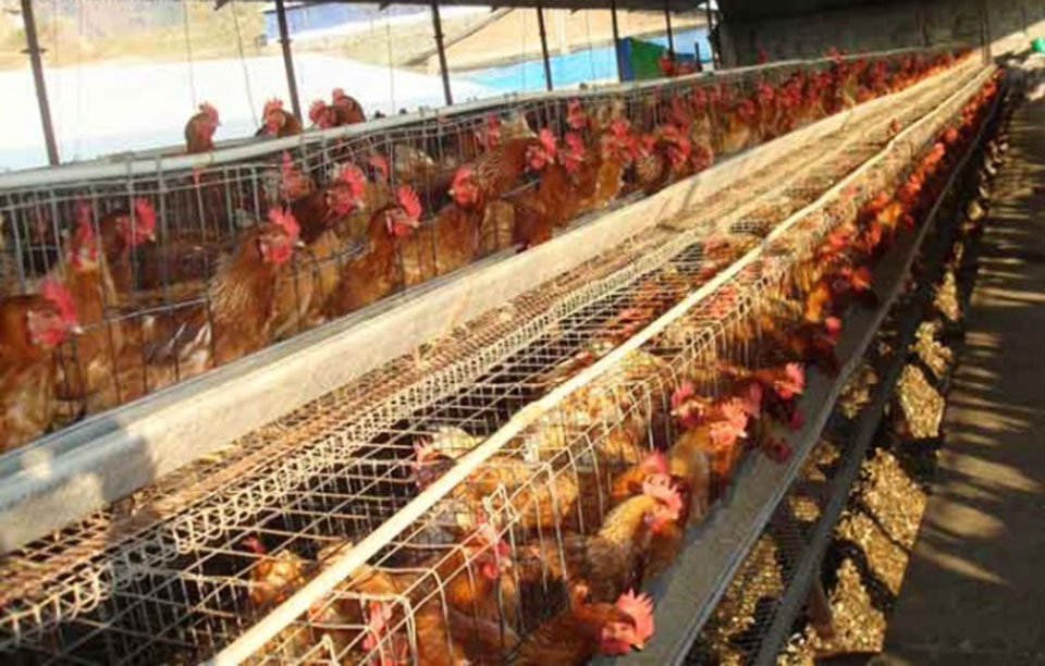 Farmers urged to minimize use of antibiotics in poultry farms