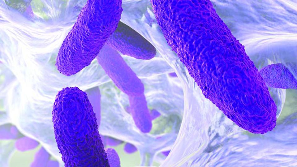 Resisting antibiotic resistance