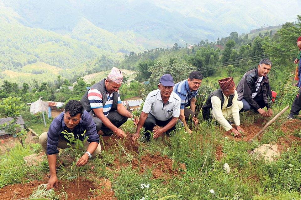 Tea farming starts in Dhading