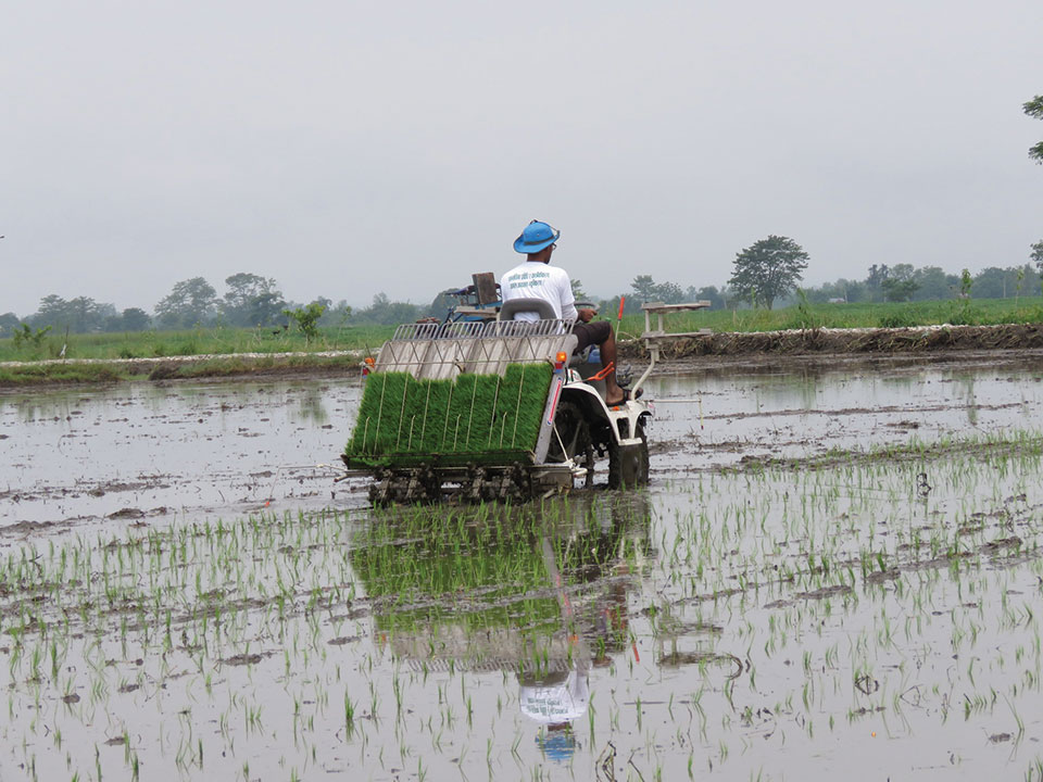 Chitwan farmers use modern equipment to transplant paddy