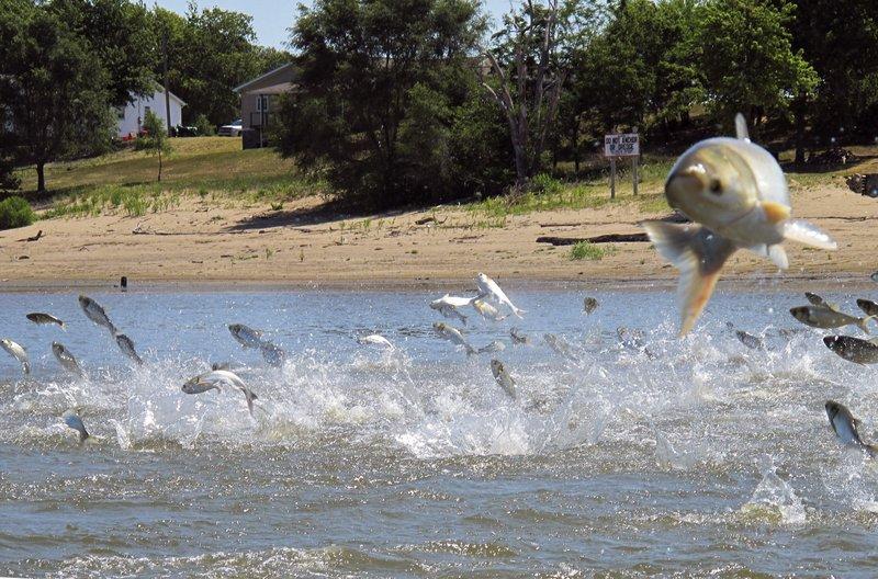 Kentucky wildlife officials trying new Asian carp control