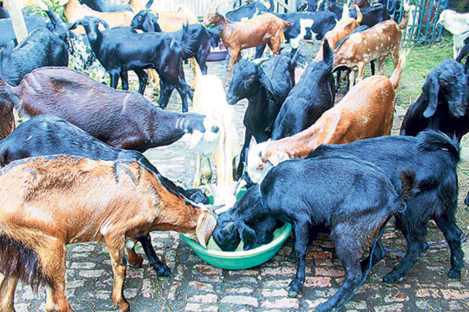 Mutton and chicken prices rise