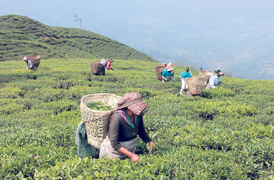 Tea Testing Centre for the first time in country