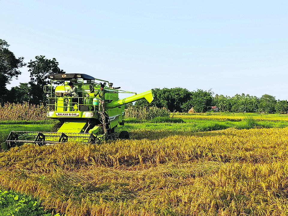 Farmers suffer as paddy production cost rises, price falls