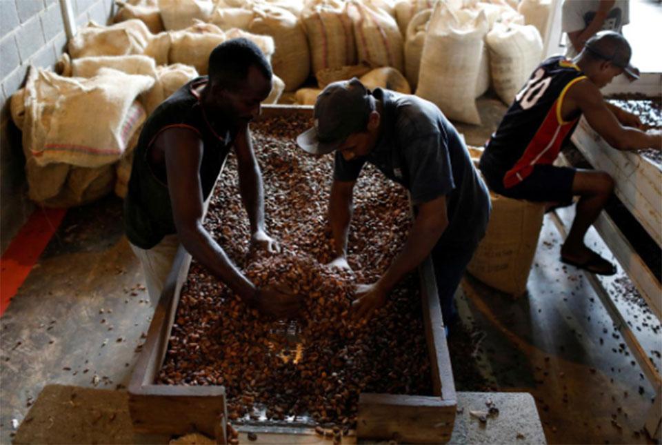Venezuelan cocoa piles up in New York as exporters scramble for cash