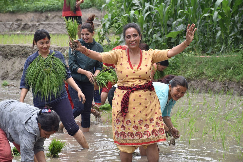 IN PICTURES: National Paddy Day being observed
