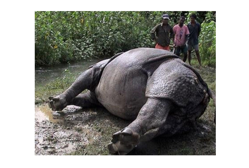 Rhinos in CNP continue dying from preventable causes