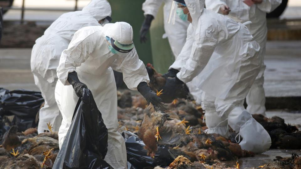 Bird flu detected in poultry farm  in Kaski