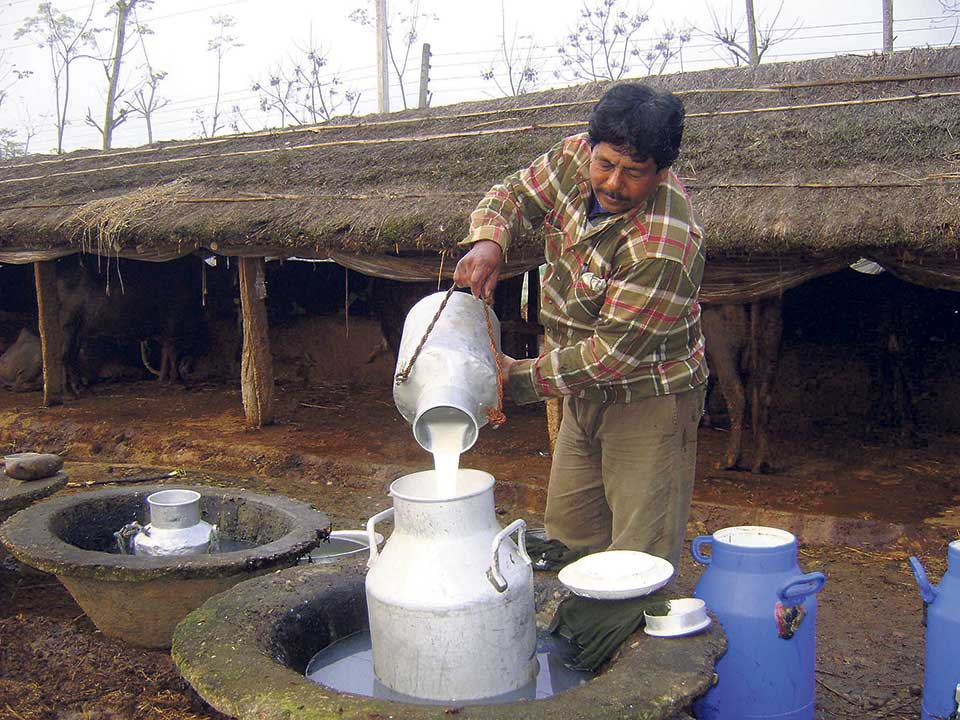 We don't need FDI, says dairy industrialists