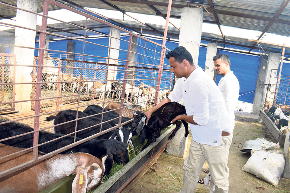 Farmers elated as govt tightens livestock imports