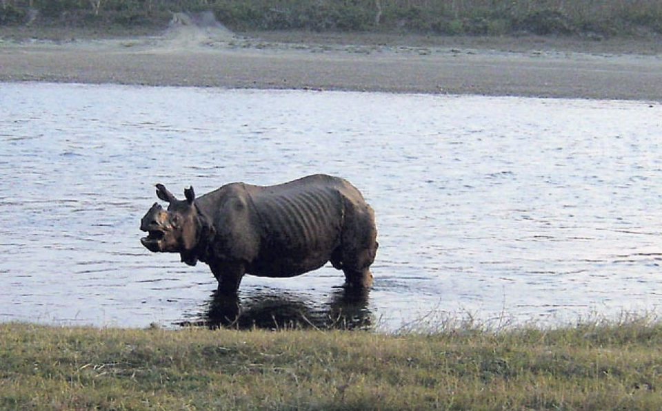 Nepal to conduct Rhino census in March 2020