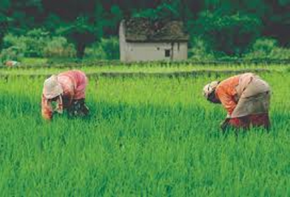 What is missing in budget for agriculture?