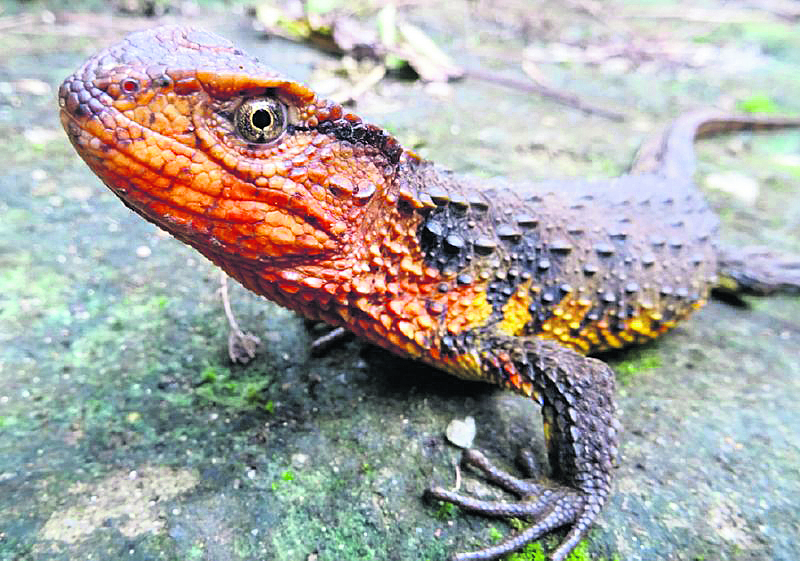 More than 100 new species found in Mekong region