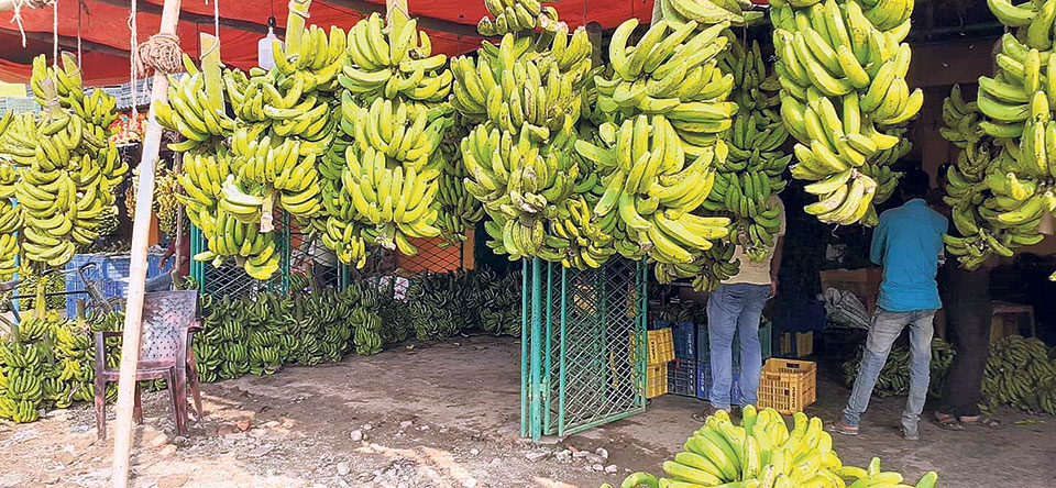 Bananas worth Rs 10 million imported for Chhath