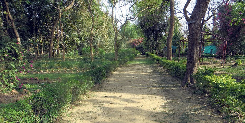 Enticing beauty of Dhakeri botanical garden