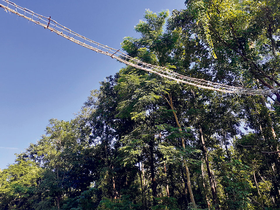 Banke National Park builds canopy bridge to reduce wild animal road accidents