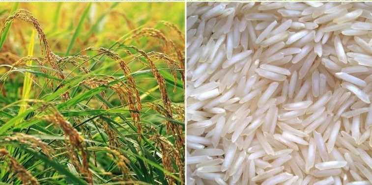 Nepal to claim geographical indication right on Basmati paddy