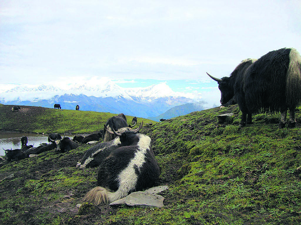 Yak rearing source of income for community schools