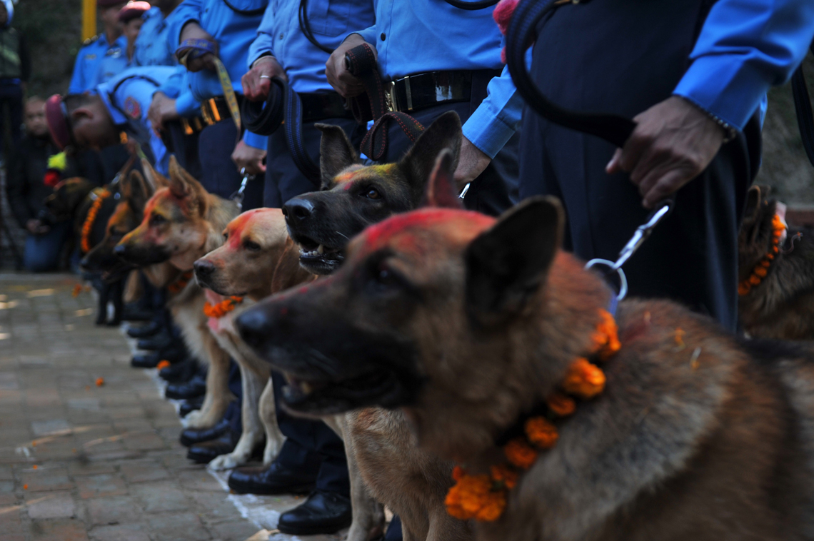Kukur Tihar at Central Police Dog Training School (photo feature)