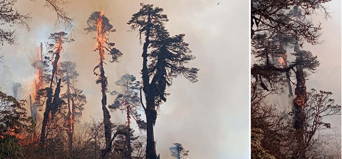 Forest fire in Pathivara Temple area in Taplejung goes out of control