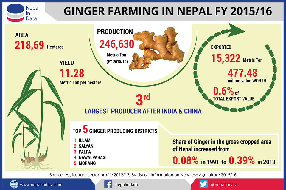 GINGER FARMING IN NEPAL IN FY 2015/16